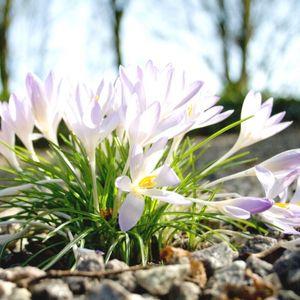 Pavasarīga saruna par ziediem, grāmatām un skaistiem dārziem!