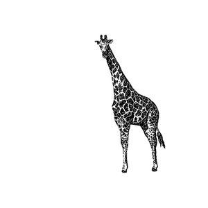 Meakusma with Giraffe - 16/03/2019