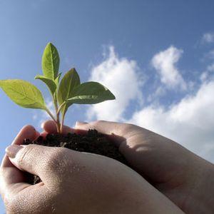 יצירה עצמית- יצירה אקולוגית וברת קיימא. תכנית מס' 10