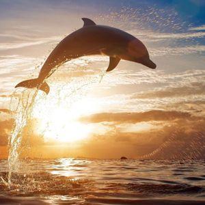 The Royal Concept, Late Show och delfinbildernas delfinbild