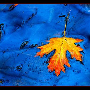 Autumn blues 2009
