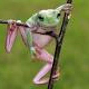 christian knubel - wo der frosch die locken hat