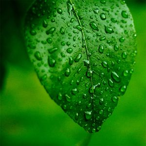 Mustafa Sarioglu - Green Leaf (15.05.2010)