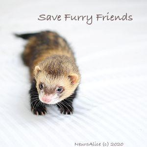 Save furry friends // 36E5EA1D2262B74D92332AFF3929B7CE