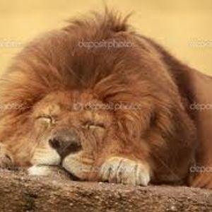 DJ T-Rod - THE SLEEPING LION