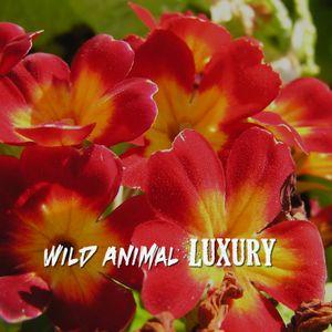 Wild Animal Luxury