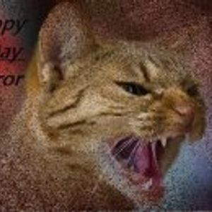 MAEIJ MEETS VDF-PROJECT on Gizmo´s Revenge of B-Day Terror 02.11.2012 auf 03.11.2012