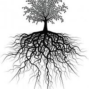 The Cosmic Roots