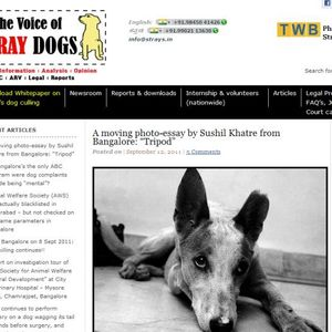 The voice of stray dogs in India