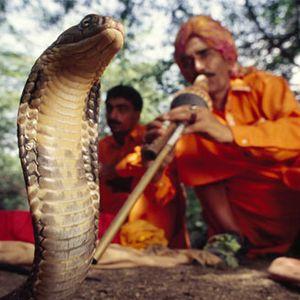 the snake charmer 1