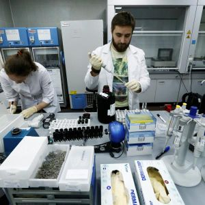 Russia Tries to Avoid Olympic Doping Ban