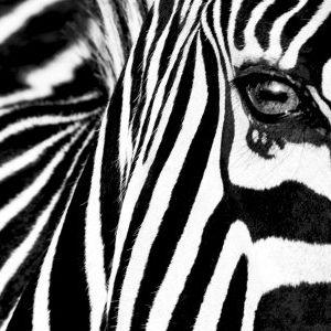 zebra live dj promo >Hardcore<