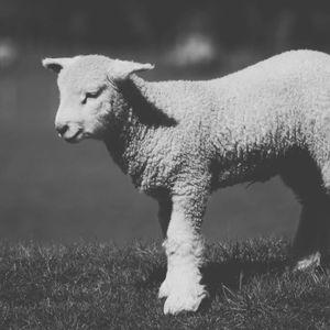 The Lamb of God Sept. 13 2015 Sermon
