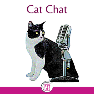 Cat Chat #1037 (02-16-2015): Cat with insatiable hunger; best place for cat to live