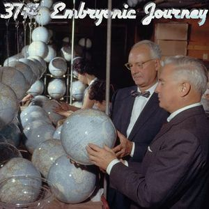 37# Embryonic Journey