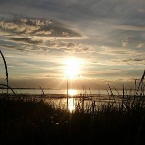 Sunshine's Better ( July ' 16 )