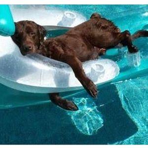 Dog days of House