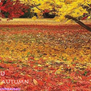 nemiegu - Autumn