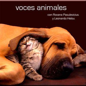 Voces Animales - 16 de febrero 2013
