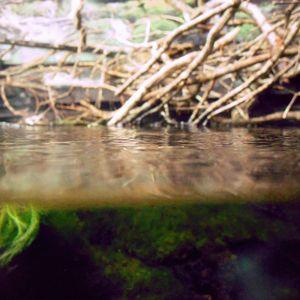 Les palétuviers de la mangrove