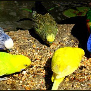 Parakeet (Iron Curtis - Sxthemadartist - Misel Quitno - Deflon - Locked Groove - Bellybelle)