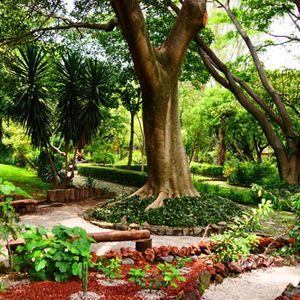 Jardin etnobotanico 2