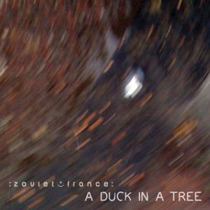 A Duck in a Tree 2014-05-24 | Spring Reverberates