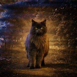 The ultra Cat