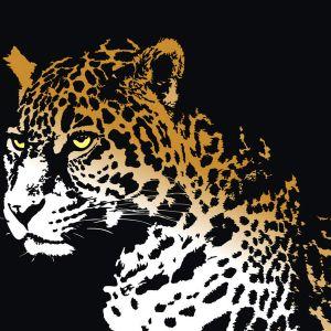 D Jaguar_ Trees_Enero Promo Mix 2012