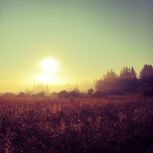 Danwa - Autumn Sun