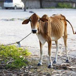 No Skinny Cows in God's Economy
