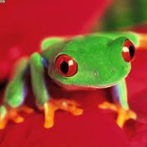 Frog techno