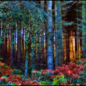 Forest kliuk 12