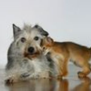 Marco Maeijs - Katz und Hund