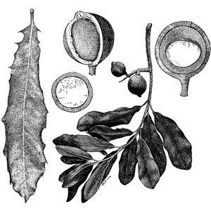 מקדמיה 27.12.16 - יואב מה טוב, על מוח אבולוציה ושפה, ואיך הפכנו ליצורים תבוניים