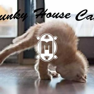 Mephisto - Funky House Cat