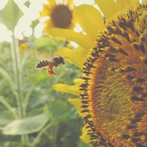 GVP #33: Bees & Success