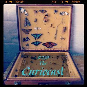 Toadcast #239 - The Curiocast