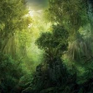 AscensionSoulJah Promo mix Bombaclat Forest Groove