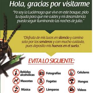 Paseos culturales: espectáculo de luciérnagas en Tlaxcala