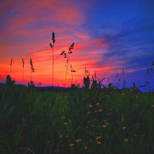 Synestezja 16 - Sen Nocy Letniej