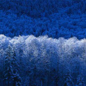 winter  euphony
