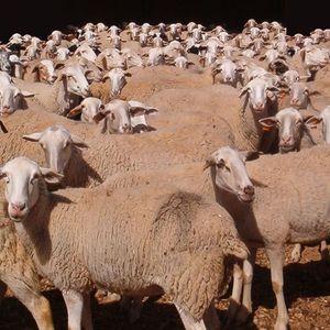 So Deep... Sheep