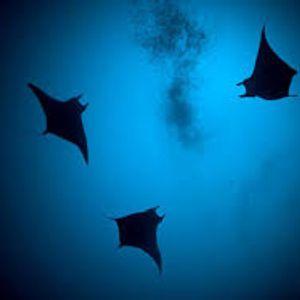 Dive Deep with Boronbo Vol_3