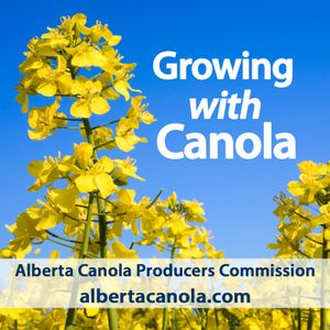 Canola scouting with Nicole Philp and Keith Gabert