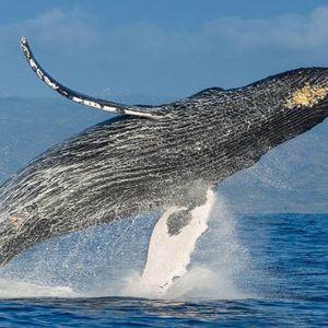 Paseos Culturales INAH: Occidente y las ballenas jorobadas, Jalisco y Nayarit