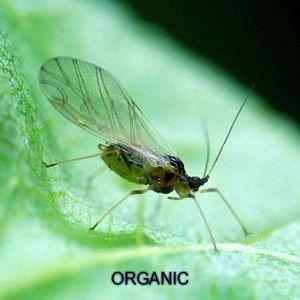 Moonkey - Organic