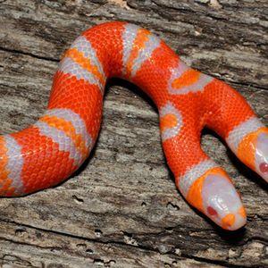 Snakes #08 - 18/11/11 - on RadioBasePopolare