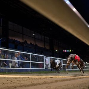 Greyhound Podcast - William Hill Greyhound Derby Quarter-Finals