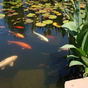 Koi Pond Sessions 174Bpm